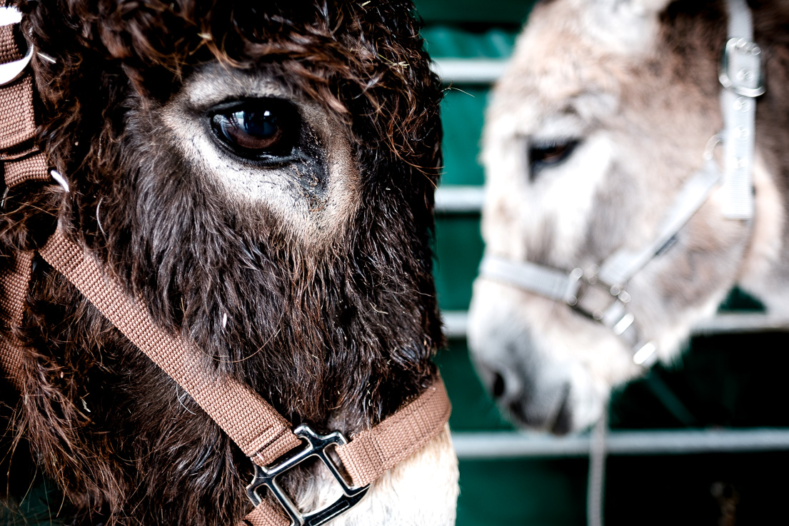 More racehorse than donkey... the Fujifilm X-H1 - Peter Poete Photography